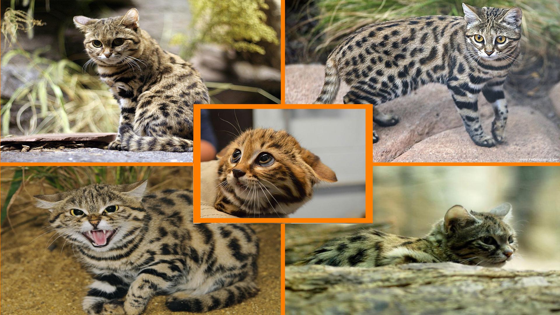 Ekmeğini Sudan Çıkaran Balıkçı Kedi