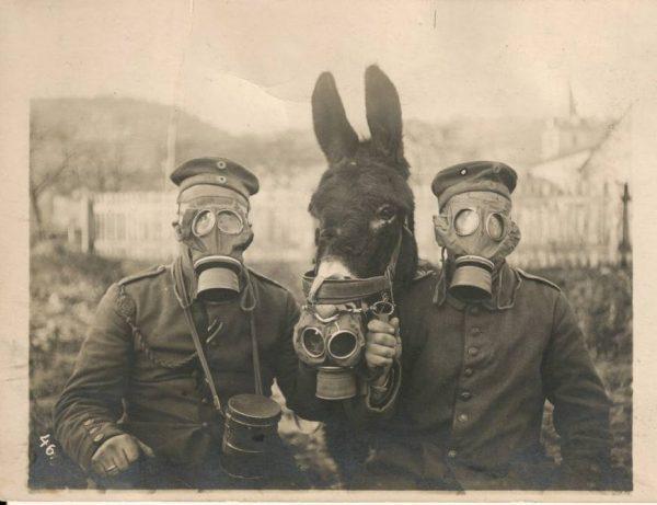german-wwi-soldiers-and-their-mule-wearing-gas-masks-photo-u1