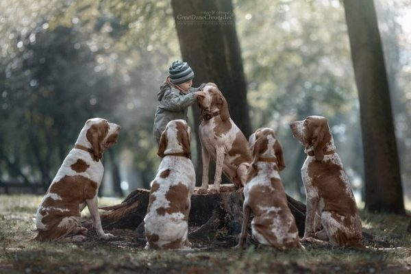 little-kids-big-dogs-photography-andy-seliverstoff-10-584fa911a2812__880