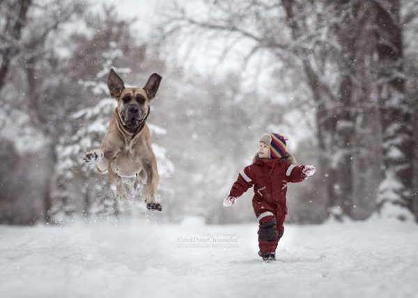 little-kids-big-dogs-photography-andy-seliverstoff-30-584fa93aa5f73__880