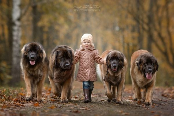 little-kids-big-dogs-photography-andy-seliverstoff-37-584fa94bad10a__880