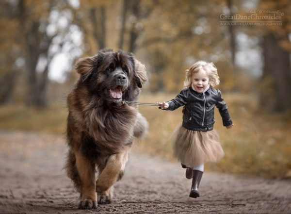 little-kids-big-dogs-photography-andy-seliverstoff-39-584fa951db6d6__880