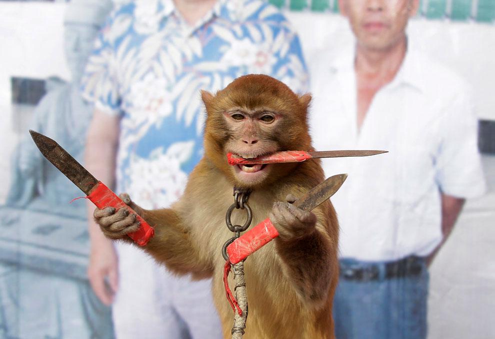 monkey farm in Baowan village, Xinye county of China's central Henan province, February 2, 2016.ü