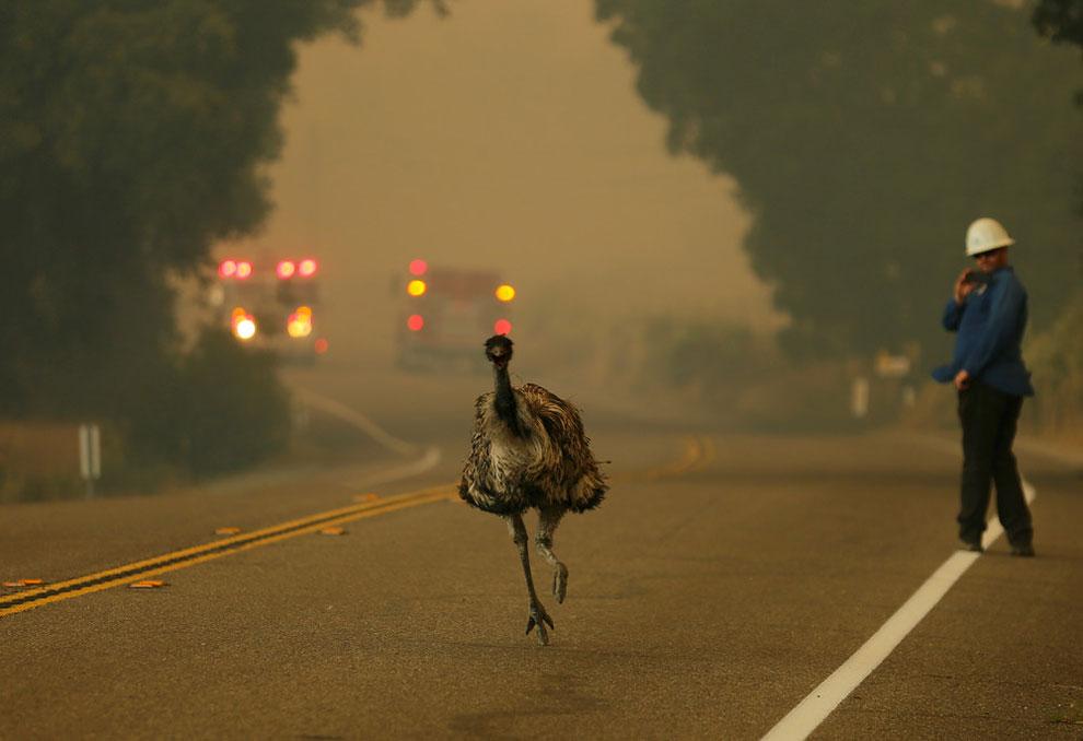 wildfire as it burns near Potrero, California, June 20, 2016