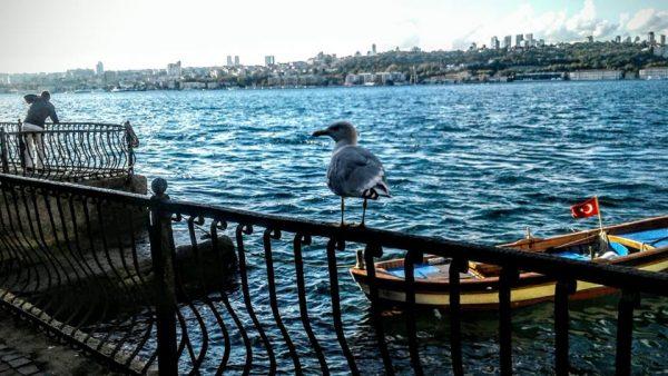 14. sen eğer yine istanbul'san