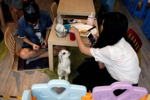a-rabbit-looks-at-a-customer-at-the-first-rabbit-cafe-in-hong-kong-china