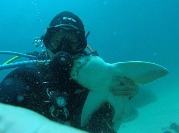diver-cuddles-shark-rick-anderson-australia-3