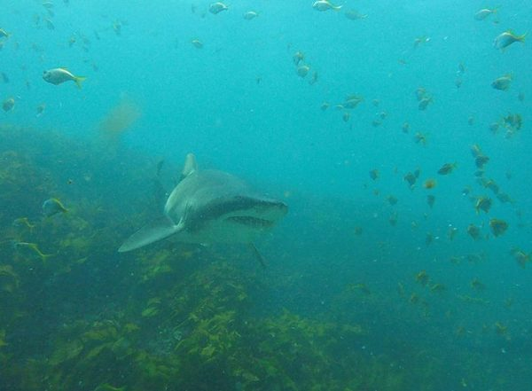 diver-cuddles-shark-rick-anderson-australia-7