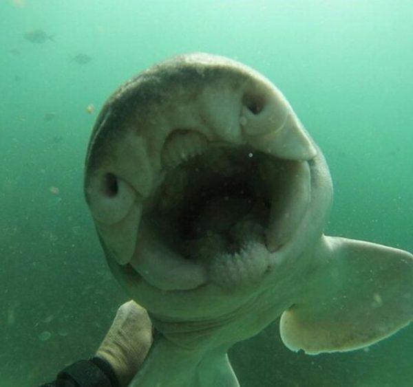 diver-cuddles-shark-rick-anderson-australia-8
