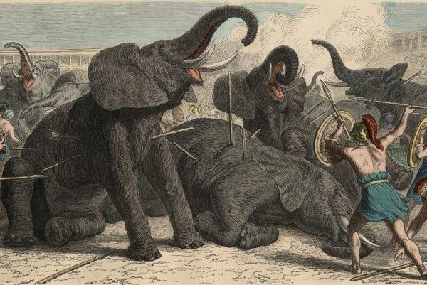 2-fil-avcisi