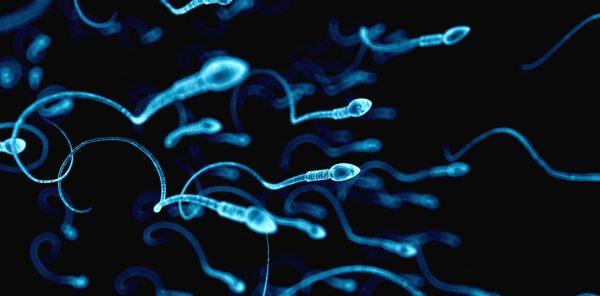 6-sperm