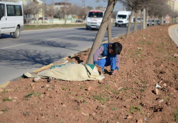 refugee-boy-helps-injured-stray-dog-turkey-1-58afe3fd60af5__880