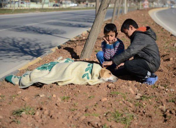 refugee-boy-helps-injured-stray-dog-turkey-3-58afe3ffd47c9__880