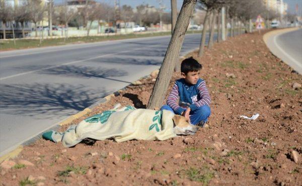 refugee-boy-helps-injured-stray-dog-turkey-4-58afe401da74c__880