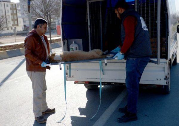 refugee-boy-helps-injured-stray-dog-turkey-5-58afe403d69b2__880