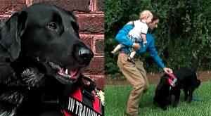 15b-Monster-babysitter-hero-dog-Benjamin-carrying-toddler-Finn-Jordan-Killian