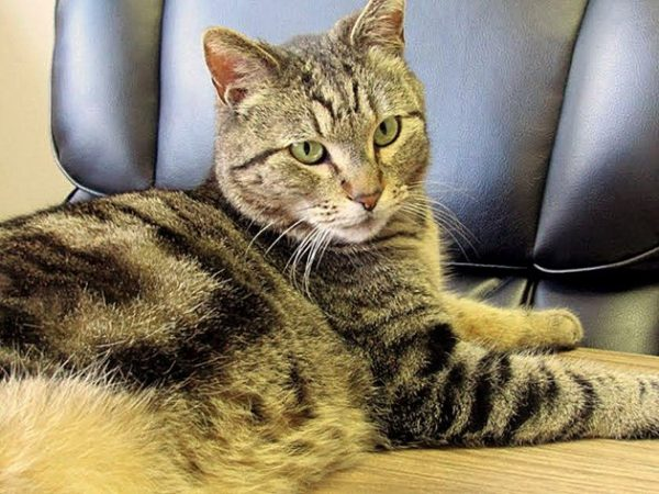20170329-lost-cat