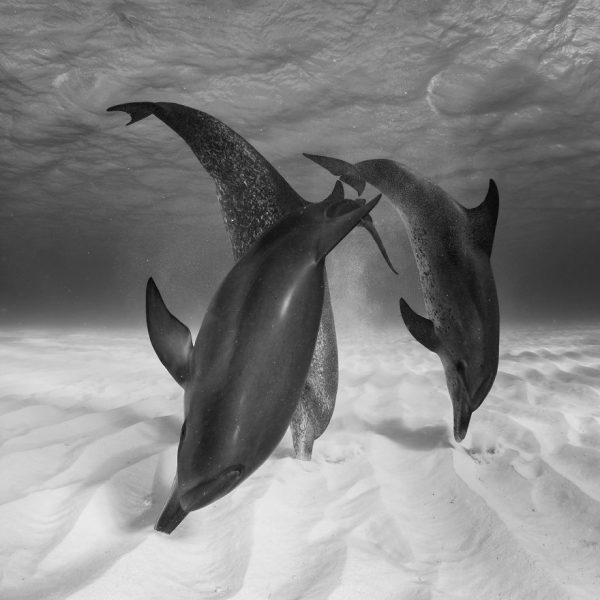 205525_221072_0_-Eugene-Kitsios-Netherlands-Shortlist-Open-Competition-Wildlife-2017-Sony-World-Photography-Awards-58c68fce471fe__880