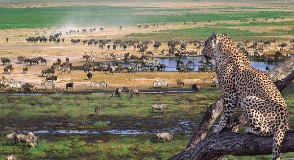 23-Serengeti