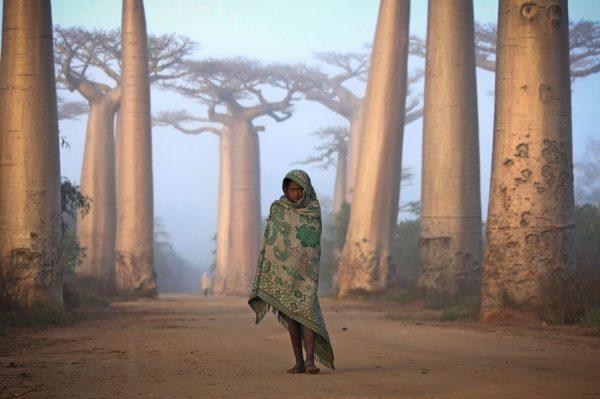38-2-baobab