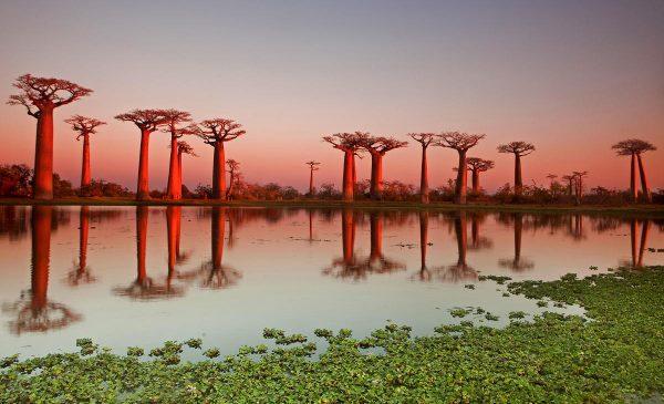 38-Baobab