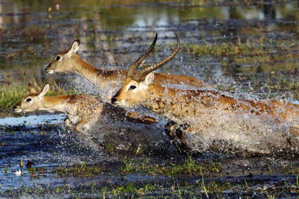 45-2-Okavango