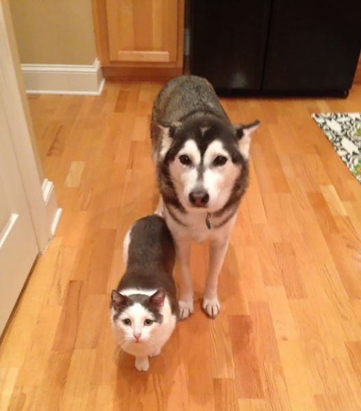 6744610-brother-from-another-mother-similar-animals-13-578629b08610e__605-1468827925-650-7afd8ecbae-1484149443