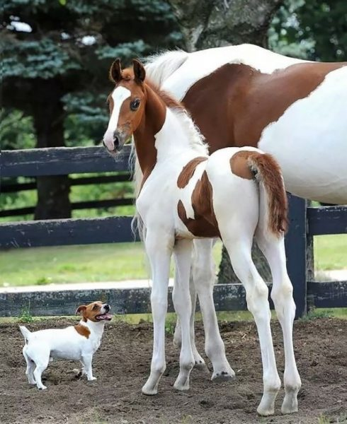 6744760-brother-from-another-mother-similar-animals-2-5786298929f7d__605-1468828494-650-561e6e4db2-1484149443