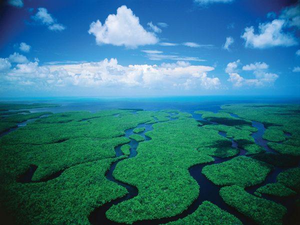 7-Everglades