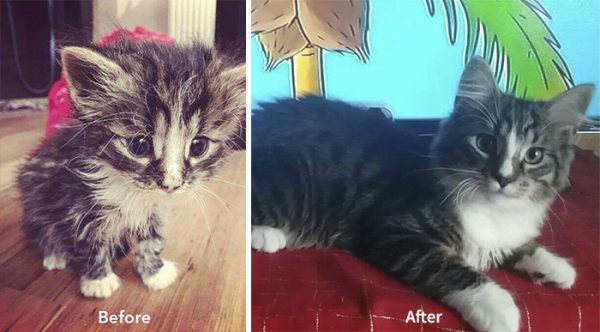 A-girl-from-Latvia-rescued-more-than-350-homeless-cats-during-last-2-years-58bd31c803d37__700