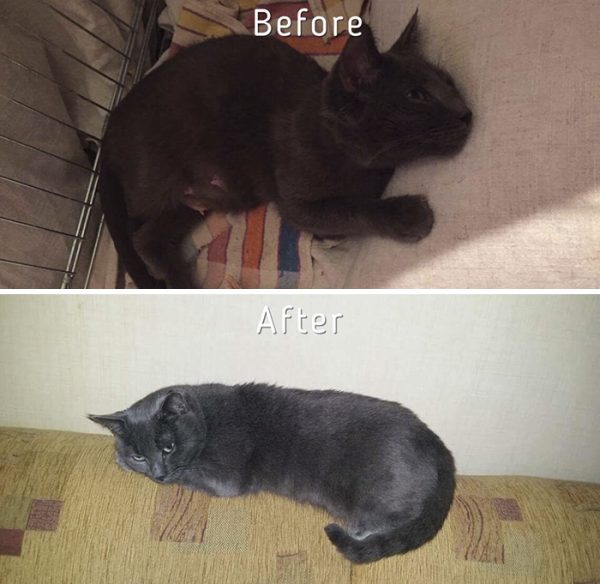 A-girl-from-Latvia-rescued-more-than-350-homeless-cats-during-last-2-years-58bd3776b3c05__700