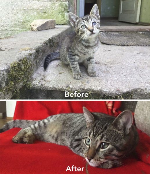 A-girl-from-Latvia-rescued-more-than-350-homeless-cats-during-last-2-years-58bd395933d8e__700