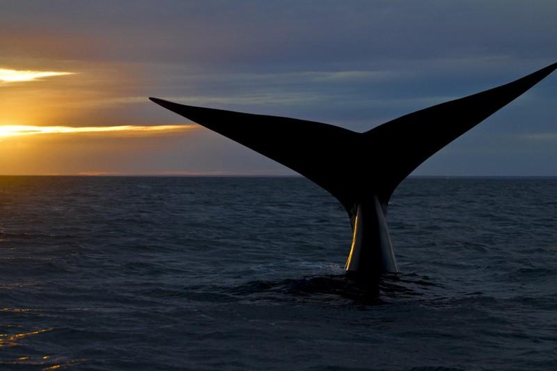 En-sessiz-sakin-5-destinasyon-patagonya-balina
