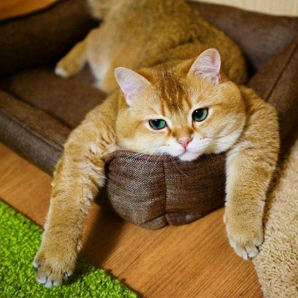 Hosico-Cat-58b920b53ff93__880