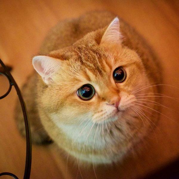 Hosico-Cat-58b920f533f35__880