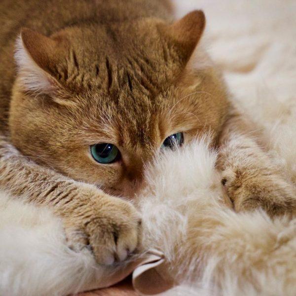 Hosico-Cat-58b92137ab0c9__880