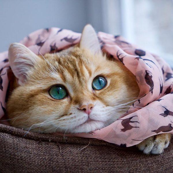 Hosico-Cat-58b921624d259__880
