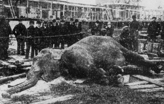aylakkarga-elefante