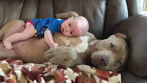 bebek ile