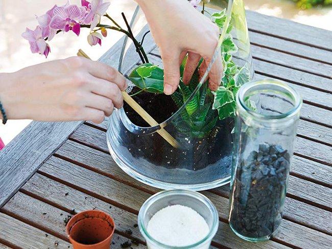 bitki yerleştirme