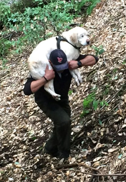 blind-dog-found-after-week-california-mountains-14