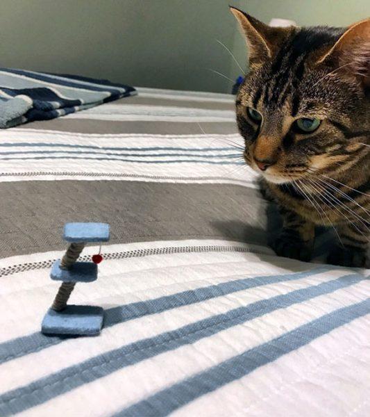 cat-prank
