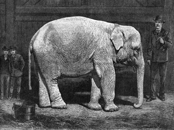 forepaugh-white-elephant-2