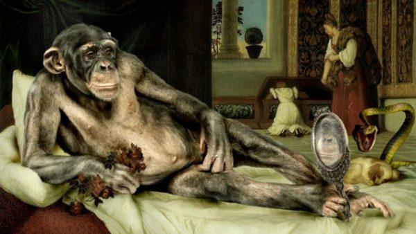 kapuçin-maymunu-para-kullanmayı-öğrenince-638x359