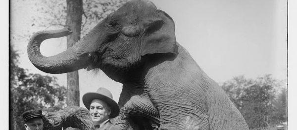 wf_121113_Elephant-LOC_680x300