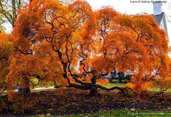 1. Ağaç Olsam