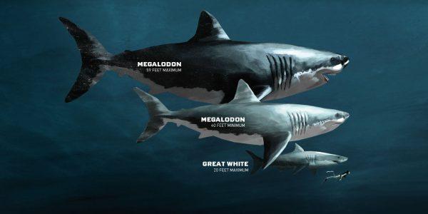 11-Megalodon