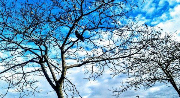 14. Rahatı Kaçan ağaç