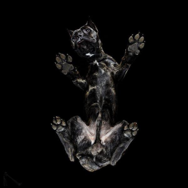 17-Under-dogs-58ec83dc4f6da__880