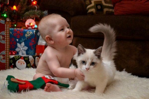 1732805-babycat-650-0fa8da1eae-1484649395